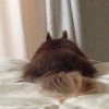 愛犬が胆泥症(胆嚢粘液嚢腫)を発症