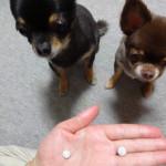 犬の免疫力を高めるサプリメント犬康食・ワンをおやつに