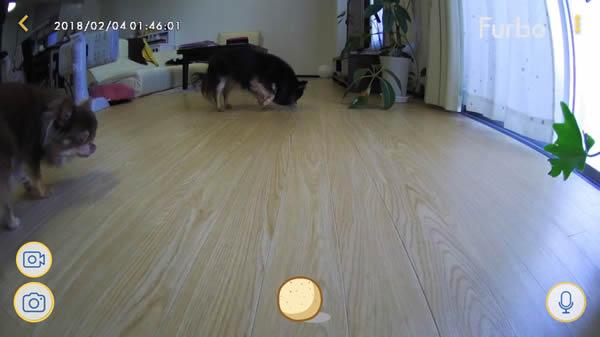 Furbo(ファーボ)ドッグカメラ アプリ画面